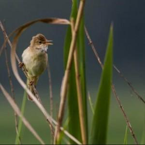 Ptaki Naszego Regionu – Wystawa Fotograficzna 1