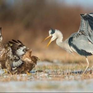 Ptaki Naszego Regionu – Wystawa Fotograficzna 2