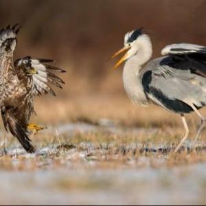 Ptaki Naszego Regionu – Wystawa Fotograficzna 3