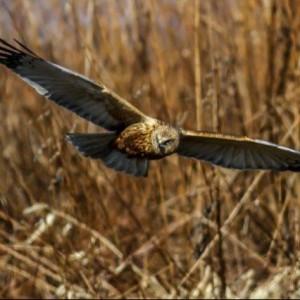 Ptaki Naszego Regionu – Wystawa Fotograficzna 4