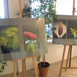 Wystawa Fotografii Ewy Walickiej – 1