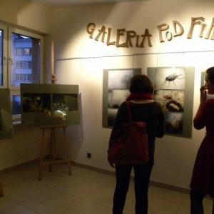 Wystawa Fotografii Ewy Walickiej – 2
