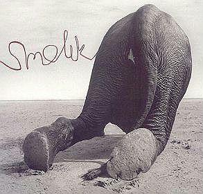 Id 1242 Name Smolik